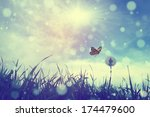 butterfly and dandelion | Shutterstock . vector #174479600