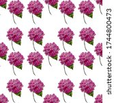 Hydrangea Blooming Flowers On ...