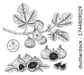 vector sketch fruit decorative... | Shutterstock .eps vector #1744809029