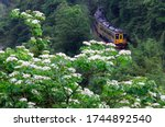 A Local Train Of Pingxi Railwa...