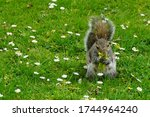 Squirrel Eating Flowers In A...
