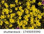 Beautiful Bright Yellow Flowers ...