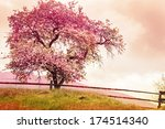 Blossom Tree Over Nature...