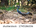 Indian Rat Snakes In Nature...