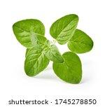oregano herb isolated on white... | Shutterstock . vector #1745278850