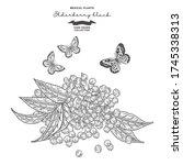 elderberry branch isolated on... | Shutterstock .eps vector #1745338313