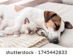 Dog And Cat Resting Together....