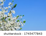 branches of blossoming cherry... | Shutterstock . vector #1745477843