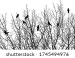 A Group Of Birds Sitting In The ...