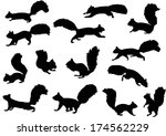 Stock vector illustration with squirrels isolated on white background 174562229
