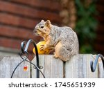 A Squirrel Sitting On A Wooden...