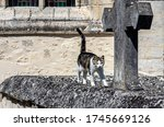 A Cat Wanders In An Old...
