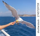 Girl Feeding Seagull From The...