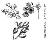 mini set of hand drawn vector... | Shutterstock .eps vector #174574349