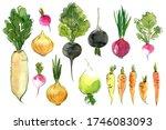 Watercolor Vegetables Sketch ...