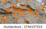 Close Up Detail Orange White...