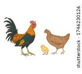 vector cartoon set of poultry... | Shutterstock .eps vector #1746230126