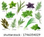 fresh herbs collection  arugula ... | Shutterstock .eps vector #1746354029