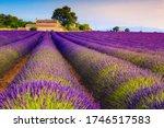 Picturesque Violet Lavender...