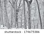 Bare Trees In A Forest During ...