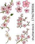 branch of cherry blossom on... | Shutterstock .eps vector #1746788006