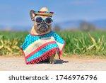 Funny French Bulldog Dog...