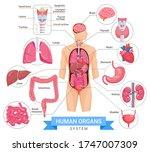 human organ system vector... | Shutterstock .eps vector #1747007309