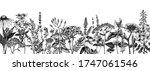 hand drawn medicinal herbs... | Shutterstock .eps vector #1747061546