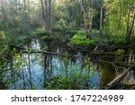 Forest River With  Dark Water...