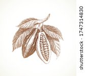 hand drawn cocoa beans on... | Shutterstock .eps vector #1747314830