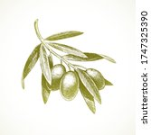 hand drawn olive branch  ...   Shutterstock .eps vector #1747325390