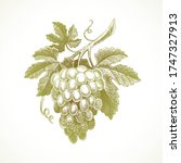 hand drawn bunch of grapes  ...   Shutterstock .eps vector #1747327913