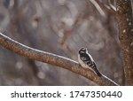 Woodpecker On A Tree Branch ...