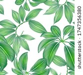 tropical summer pattern and... | Shutterstock .eps vector #1747356380