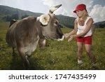 Woman Petting Cow ...