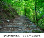 Stone Staircase In A Wood
