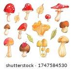 Mushroom Cep Boletus Rough Fly...