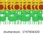 i drew the sunflower which was... | Shutterstock . vector #1747836320