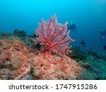 Underwater Animals Lives Under...