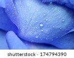 water drop on blue petals ... | Shutterstock . vector #174794390
