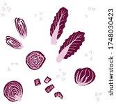 radicchio pattern. italian... | Shutterstock .eps vector #1748030423