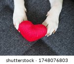 Small photo of Dog holding a red plushy heart with his paws, Romantic gift from a puppy on Valentines day