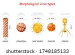 morphological types and size of ... | Shutterstock .eps vector #1748185133