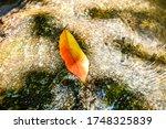 One Vivid Fallen Autumn Leaf...