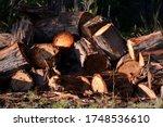 Pile Of Chainsawed Wooden Gum...