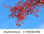 beautiful red flower with blue... | Shutterstock . vector #1748582486
