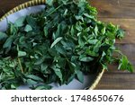 Small photo of Leaves and stems of Sauropus androgynus plants, in Indonesia called daun katuk, used so that mother's milk gets smoother and medicines. Isolated