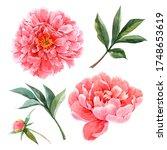 beautiful set with watercolor... | Shutterstock . vector #1748653619
