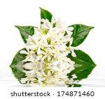 Jasmine Flowers With Reflection ...