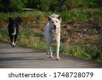 Street Photo Thai Dogs Walking...
